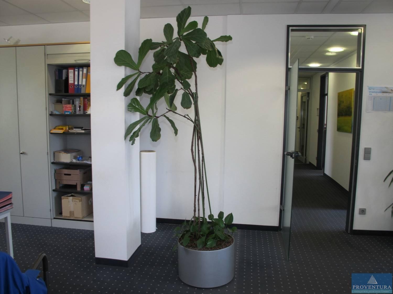 Zimmerpflanzen Hydrokultur Proventura Online Auktion
